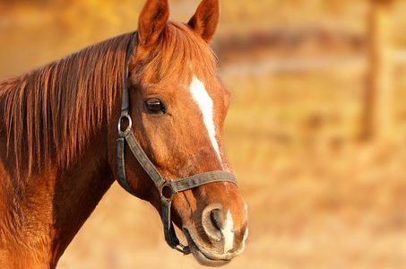 horse-1201143__340